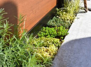 徒手自然療法室SORAの入り口の緑